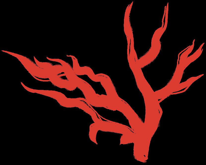 souvenir corallo rosso
